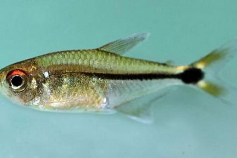 Wow, 60 Spesies Baru Ditemukan di Suriname