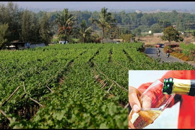 Inilah Wine India Pertama