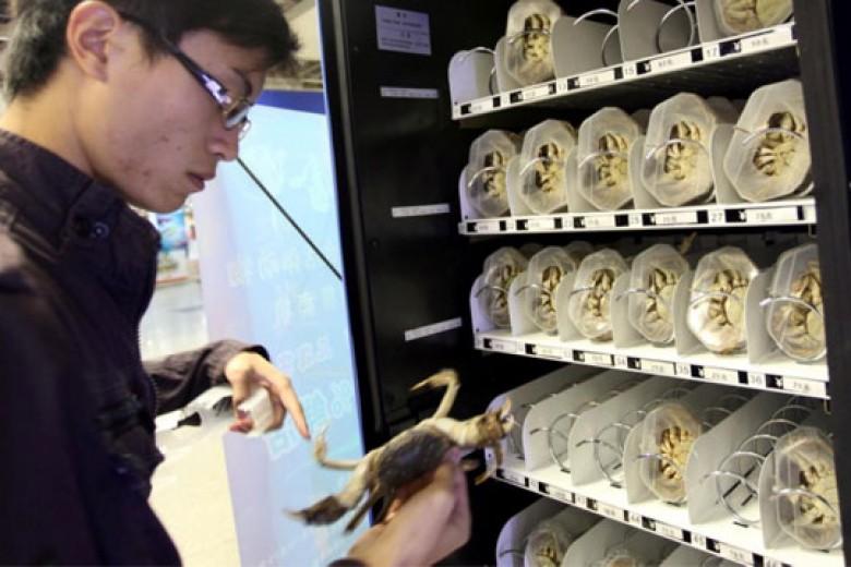 Bisnis Kepiting Hidup dengan Vending Machine