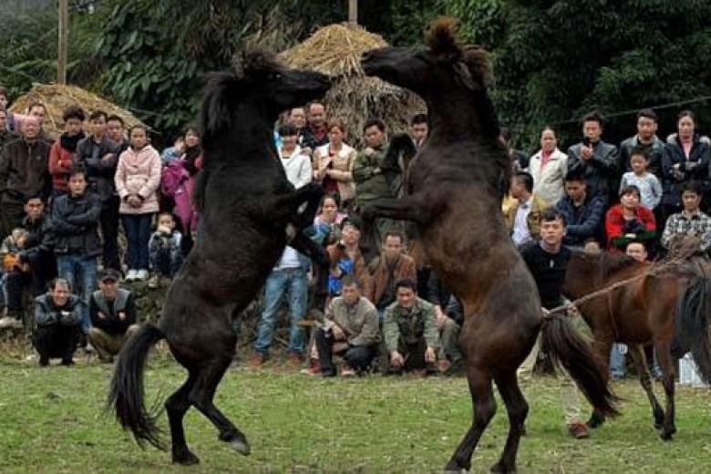 Tradisi Tahun Kuda di China
