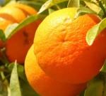Orange, Warna atau Buah?