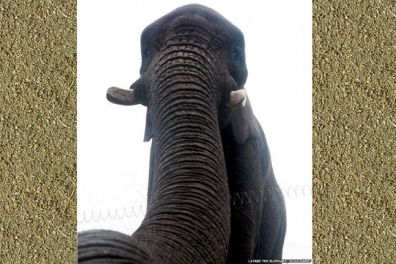 Gajah pun Bisa Selfie