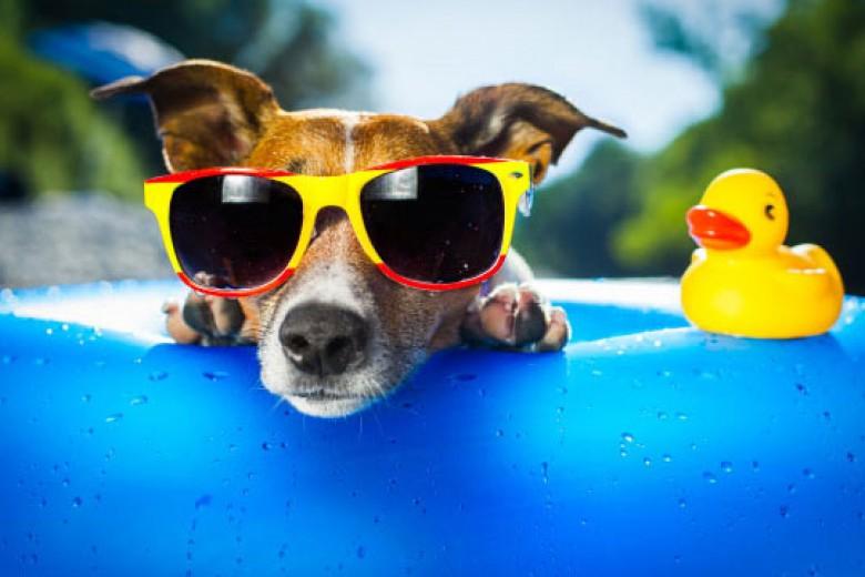 Kacamata Berfilter UV Itu Penting!