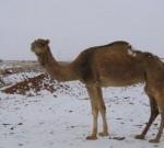 Hujan Salju di Sahara