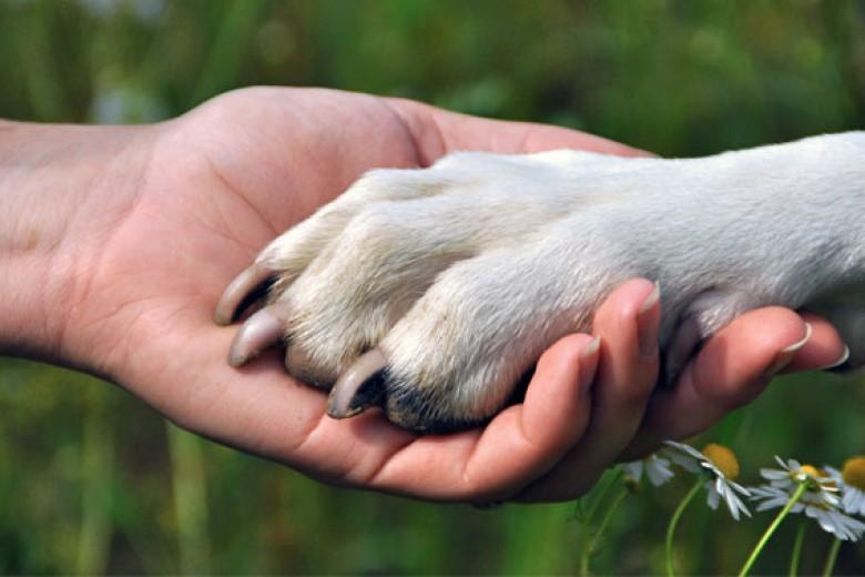 Pelihara Anjing Turunkan Risiko Asma Pada Anak?