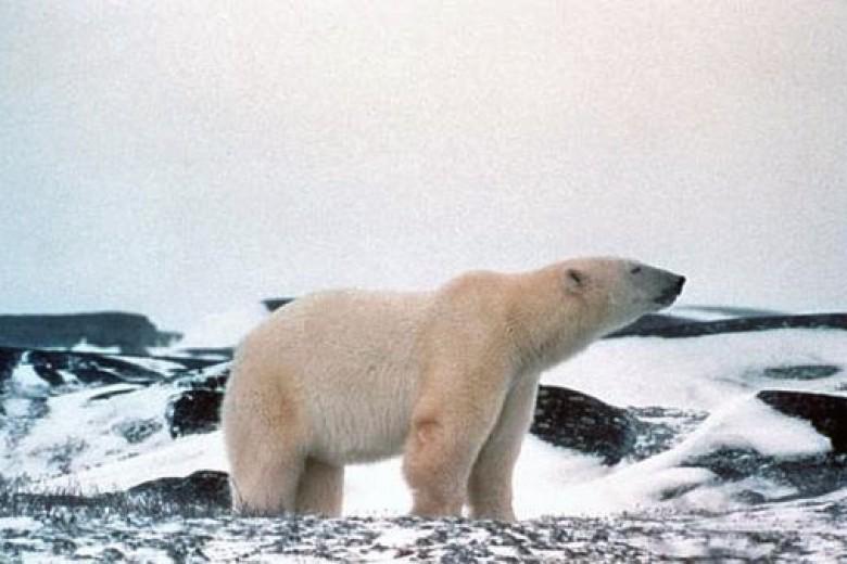 31 Spesies Masuk Daftar Perlindungan PBB