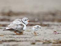 Burung Sikatan di Sulawesi Ditemukan