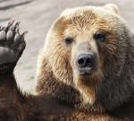 Rusia dan Beruang Merah