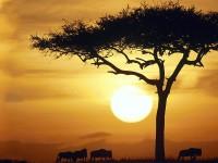 Afrika di Mata Dunia