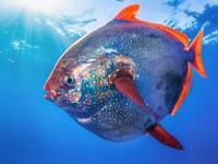 Ilmuwan Temukan Ikan Darah Panas