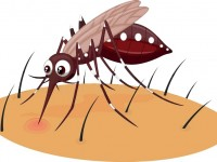 Alternatif Hindari Gigitan Nyamuk