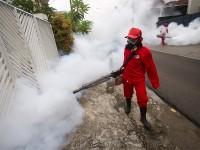Butuh 2-3 Tahun Musnahkan Zika