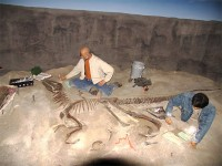 Tulang Dinosaurus Jadi Obat