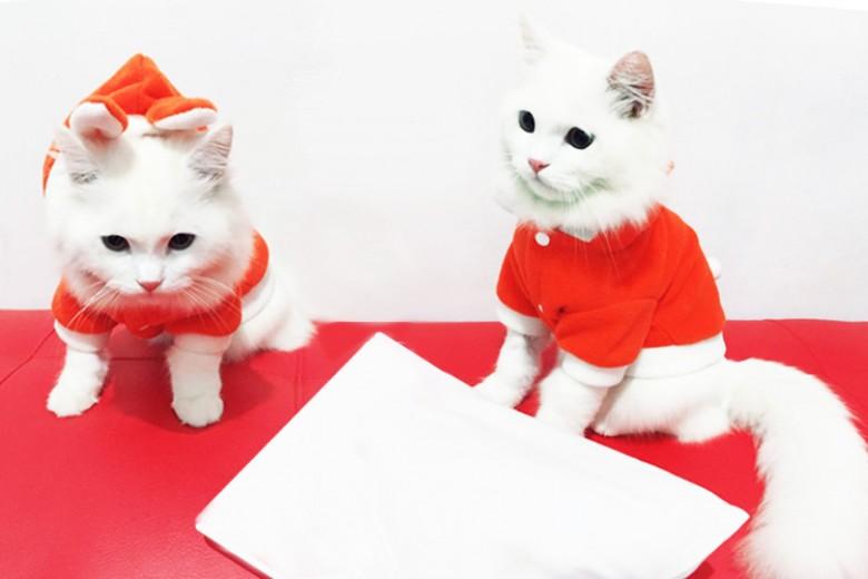 Manfaat Pelihara Kucing Bagi Anak
