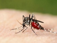 Kemenkes Minta WNI Waspada Zika