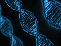 Kenaikan Berat Badan Berlebih Ubah DNA