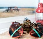 Apa Warna Darah Lobster?