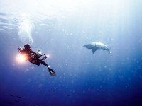 IWC Aquatimer Gets Up Close With Sharks
