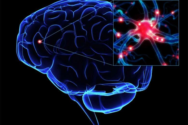 Perbedaan Otak Perempuan dan Laki-laki