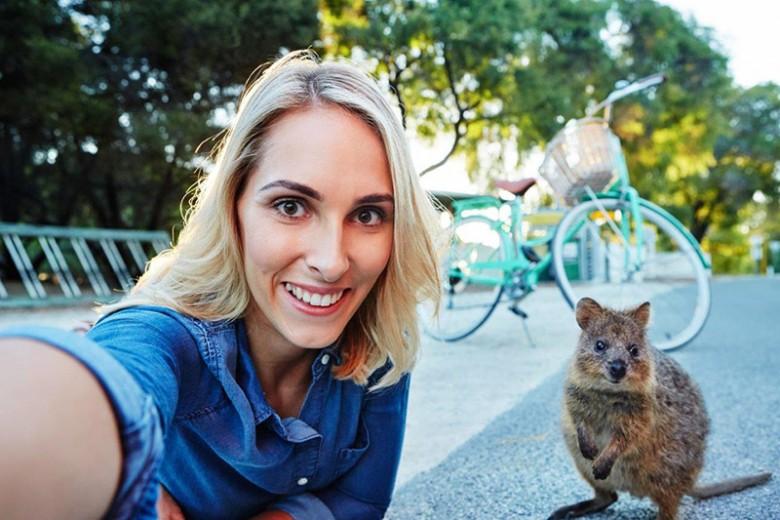 Quokka, Si Imut dari Australia Barat