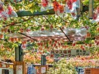 Pelesiran ke Negara Modern Penghasil Anggur