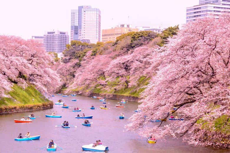 Kapan Waktu Tepat Liburan ke Jepang?