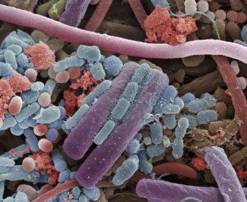 Apa Beda Virus, Bakteri, dan Kuman?